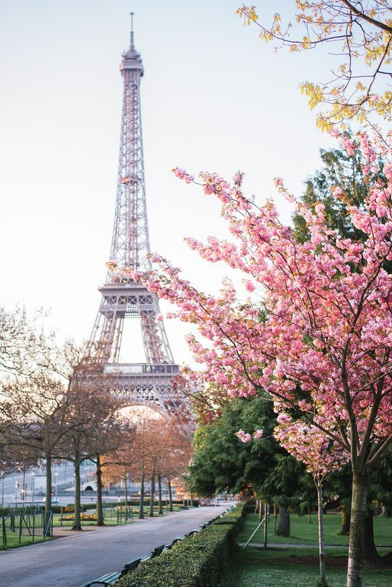 flowering tree, eiffel tower and spring - Sunrise, early in the morning